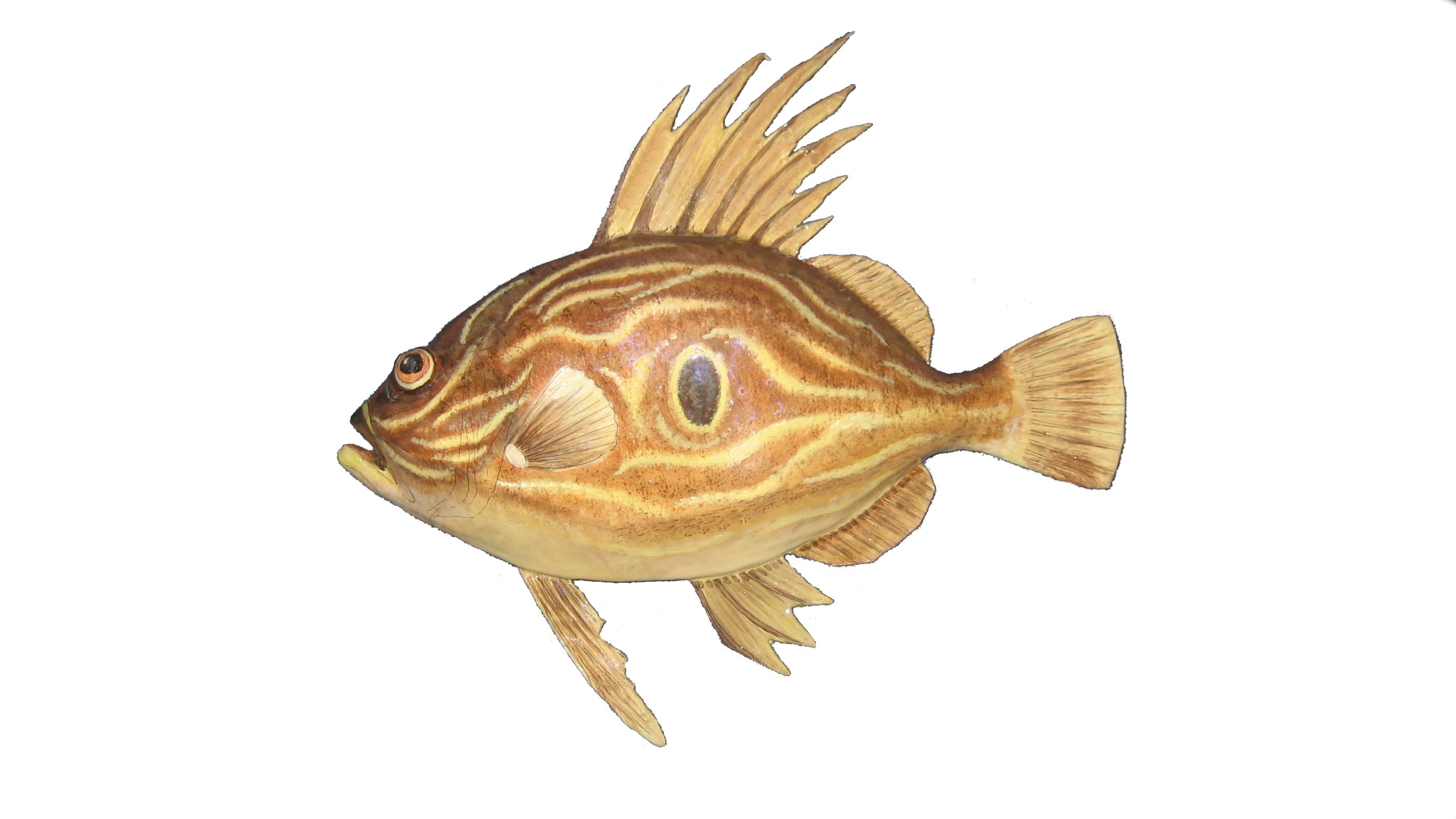 Picture of a John Dory fish