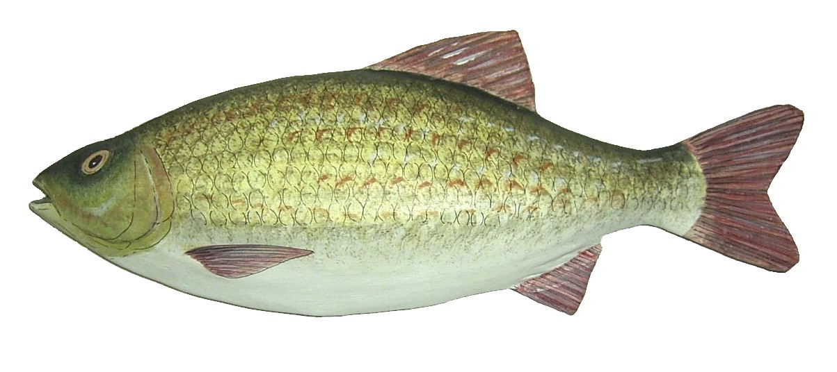 Picture of a papier maché Rudd fish